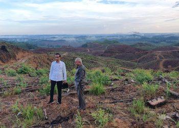 Presiden Jokowi saat meninjau wilayah Ibu Kota Baru. ((KOMPAS.com/Ihsanuddin))